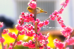 Plum-Blossom & White-Eye Ⅲ