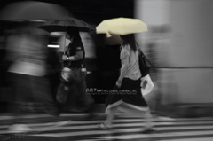 The Rainy Crossing Ⅱ