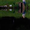 近所の沼にて・・・