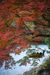 嵐山公園 - 包まれる