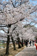 春色キャンパス