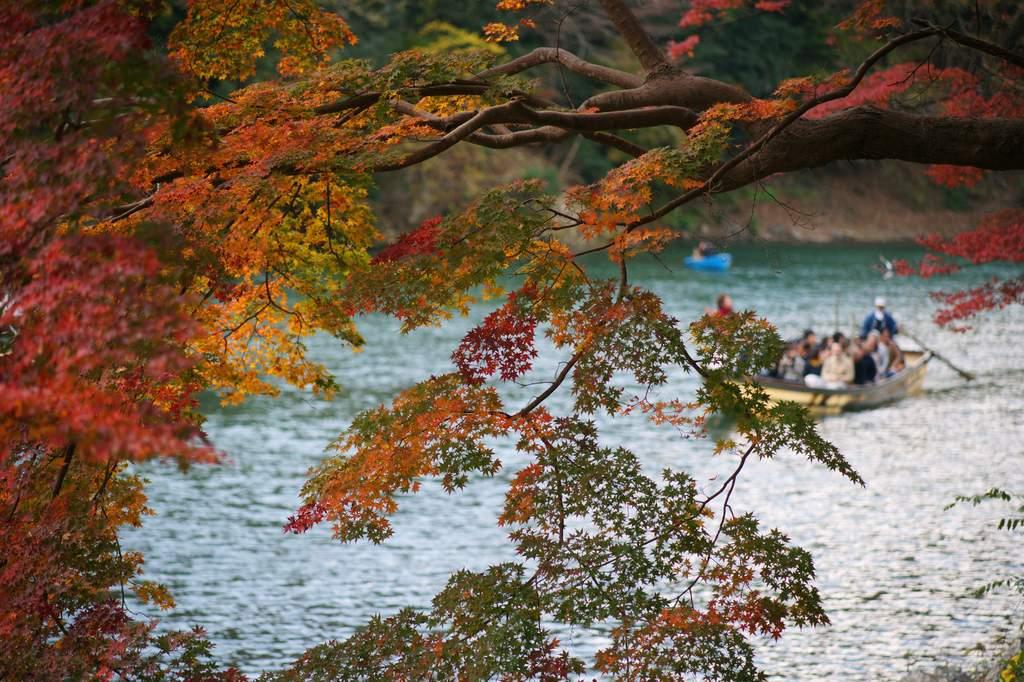 嵐山公園 - 色の氾濫