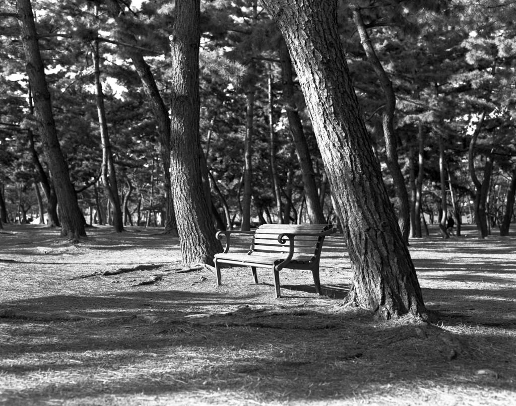 日当たりの良いベンチ