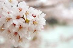 春色の陽射しに (2)