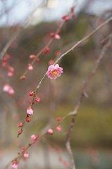 梅の香りは春風に乗って