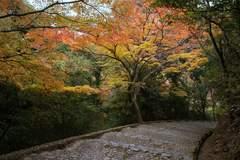 嵐山公園 - 一瞬の静寂