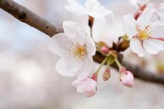 春色の陽射しに (1)