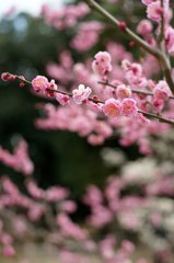千里丘陵に春近し