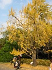 大きな銀杏の木のしたで