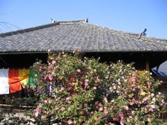 椿寺と散り椿