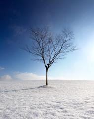 冬はつとめて