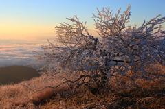 高ボッチ山の寒い朝