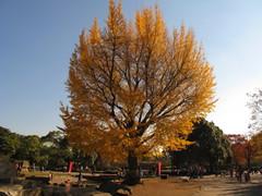 平塚市総合公園01