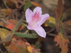 寒さにたえる花