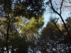 日が当たる木