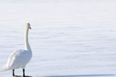 氷上に立つ