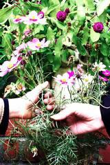 手に手に花を