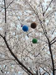 桜祭りの日
