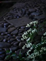 姫空木と石畳