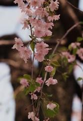 春のおわりに