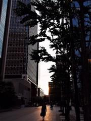丸の内夕景
