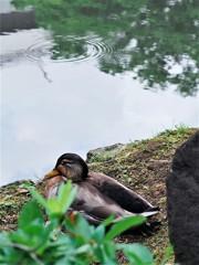 池畔の風景