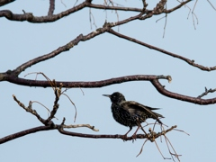 樹上で羽根繕い