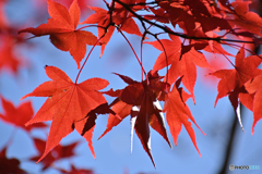 秋晴れの日