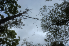 見上げると旅鳥