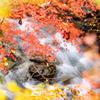秋色と流れ