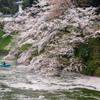 花の流れを行く小舟