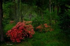雨の日の森の中