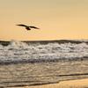 surf & sky「記念撮影に遅れて来るやつ」