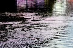 お堀の花筏-1