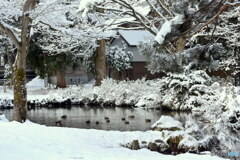 この冬最後の雪景色?