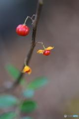 小さな赤い実