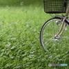 今朝は自転車でお散歩です^^