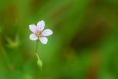 草むらで見つけた小さな花