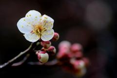 折れた枝に咲いた花