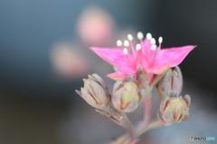 初めて見るお花