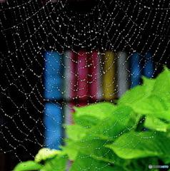 クモの巣と 窓と紫陽花