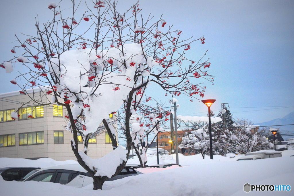 雪と ナナカマド