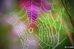 クモの巣が好きな人^^