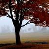 霧の朝のお散歩