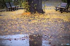 秋の応接間