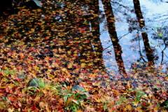 公園の池の 落ち葉