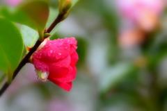 今朝は雨でした