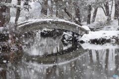 雪の心字池