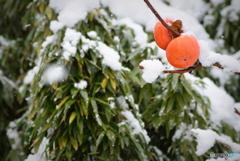 雪の中でもアツアツの二人
