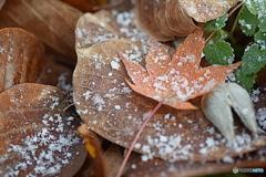 秋から冬へ ③